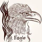 Vector hand drawn vector eagle close up plane Royalty Free Stock Photos