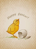 Easter background with chicken Stock Photos