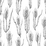 Vector hand drawn wheat ears seamlless pattern. Royalty Free Stock Photos