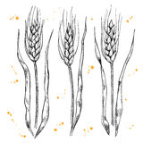 Vector hand drawn wheat ears set. Royalty Free Stock Photography