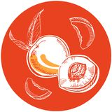 Vector hand drawn white ink peaches with leaves and slices in orange circle royalty free illustration