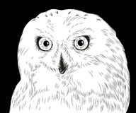 Vector hand drawn white vector portrait of owl Royalty Free Stock Images