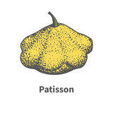 Vector hand-drawn yellow ripe large squash Royalty Free Stock Photos
