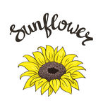 Vector hand drawn yellow sunflower on the white background with lettering. Vector hand drawn yellow sunflower on the white background with stylish lettering Royalty Free Stock Photos
