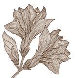 Vector Hand gezeichnete elegante Blume in der Weinleseart stock abbildung
