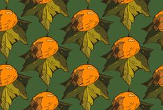 Vector hand painted  seamless pattern with persimmon on leaves. on green background. Perfect for wallpaper, wrapping paper, textil Royalty Free Stock Images