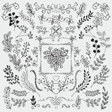 Vector Hand Sketched Rustic Floral Doodle Branches Stock Photos