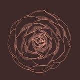 Vector hand-trekkende bloem Royalty-vrije Stock Afbeelding