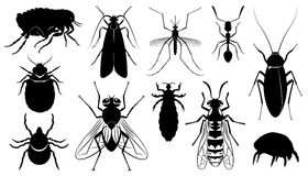 Vector the harmful, stinging and insects Stock Image