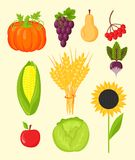 Vector harvest flat icons harvesting equipment for agriculture and horticulture, healthy natural fruits and hand tools Royalty Free Stock Photography