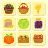 Vector harvest flat icons harvesting equipment for agriculture and horticulture, healthy natural fruits and hand tools Stock Image