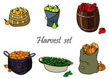 Vector harvest set Stock Images