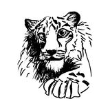 Vector hatching tiger Stock Photo