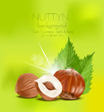 Vector hazelnut kernels with the leaves Royalty Free Stock Photos