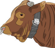 Vector head of a bull Stock Image