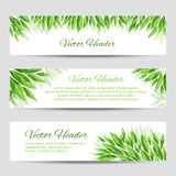 Vector headers with green leaves Stock Photography