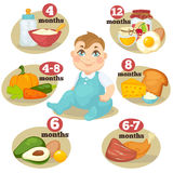 Vector healthy food for babies. Healthy food for babies in different age. Information with healthy nutrition for child. Vector set with illustration. Cartoon Stock Image