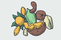 Vector healthy food illustration. Nuts hand drawn sign. Good for leaflets, cards, posters, prints, menu. Eps 10 Royalty Free Stock Photos