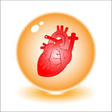 Vector heart illustration. Simply change. Other medical vectors you can see in my portfolio Royalty Free Stock Photo