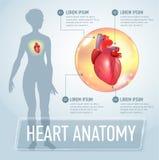 Vector heart infographics banner illustration Stock Image