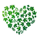 Vector heart made of summer leaves on white background in grunge style Stock Photos