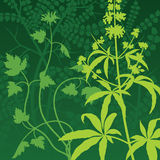 Vector Herb Background. Vector Green Background texture illustration of a wild growth of plants Stock Images