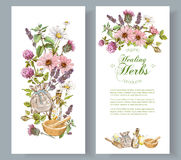 Vector herbal banner. Vector herbal cosmetics vertical banners on white background. Design for herbal tea, natural cosmetics, perfume, health care products Royalty Free Stock Image