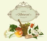 Vector herbal banner Stock Photography
