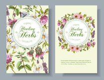 Vector herbal banner. Vector wild flowers and herbs vertical banner. Design for herbal tea, natural cosmetics, honey, health care products, homeopathy stock illustration