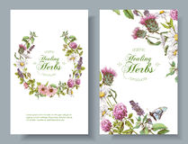 Vector herbal banners. Vector vertical wild flowers and herbs banners. Design for herbal tea, natural cosmetics, honey, perfume, health care products, homeopathy royalty free illustration