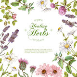 Vector herbal frame. Vector healing flowers and herbs frame. Design for herbal tea, natural cosmetics, perfume, health care products, homeopathy, aromatherapy royalty free illustration