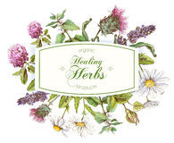 Vector herbal frame. Vector healing herbs horizontal banner on white background. Design for herbal tea, natural cosmetics, perfume, health care products Royalty Free Stock Images