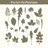 Vector Herbarium Stock Photos