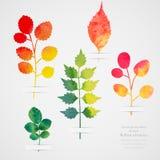 Vector Herbarium Uitstekend malplaatje Waterverfblad Inzameling van waterverfhand getrokken bladeren De herfst naadloos patroon m vector illustratie