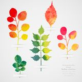 Vector herbarium. Vintage template. Watercolor leaf. Collection of watercolor hand drawn leaves. Autumn seamless pattern with leaf Royalty Free Stock Images