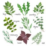 Vector herbs Stock Images