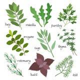 Vector herbs. Healing, medicinal and fragrant herbs, vector eps10 illustration royalty free illustration