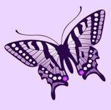 Vector hermoso de la mariposa Imagen de archivo