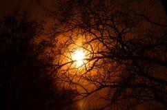 Vector hermoso del cielo y de los árboles Fotografía de archivo libre de regalías