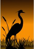 Vector heron silhouette Stock Photography