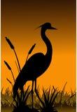Vector heron silhouette Stock Photography