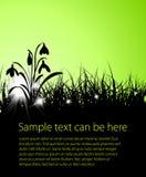 Vector het grasachtergrond van de lente Royalty-vrije Stock Fotografie