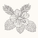 Vector hibiscus flower and leaves. Hand drawn in black and white outline for coloring page, coloring book for adult illustration Stock Photography