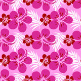 Vector hibiscus on pink Royalty Free Stock Images