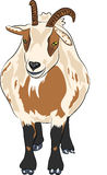 Vector hilarious funny cartoon spotted goat Royalty Free Stock Photos