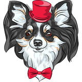 Vector hipster dog Chihuahua breed smiling. Color sketch of the cute hipster dog Chihuahua in the red hat with bow tie Stock Images