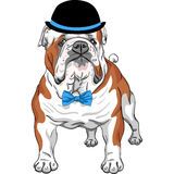 Vector hipster dog English Bulldog breed Stock Photos
