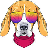 Vector hipster serious dog Beagle in glasses. Vector hipster serious dog Beagle breed in red cravat and trendy two-color glasses Stock Photos