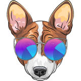 Vector hipster serious dog Beagle in glasses Stock Photography
