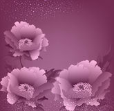 Vector holiday background with peony flowers Royalty Free Stock Images